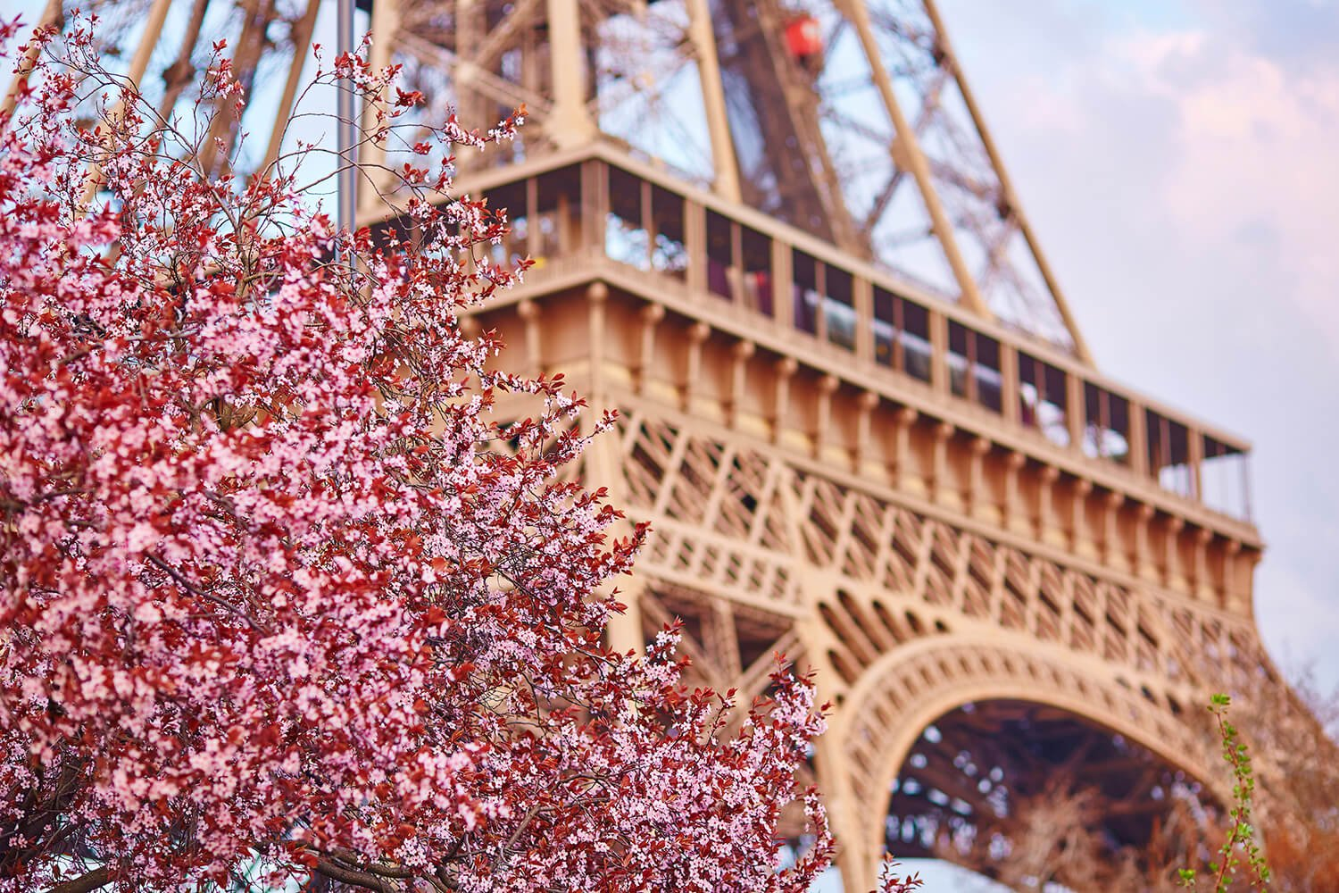 parisblossoms